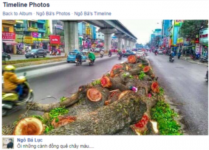 A Facebook page set up to save the trees quickly