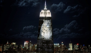Artists projected images of animals to highlight the plight of endangered species