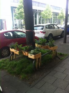 Urban gardening under the trees in the city