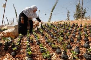 Un pequeño pueblo en Palestina siembra flores en las bombas