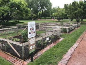 Urban gardening at a public park in Chicago