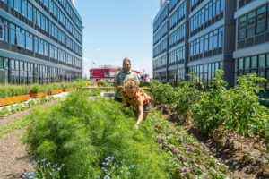 An urban gardening to donate to food banks