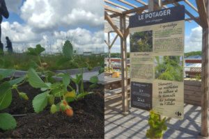 The first urban gardening roof of Carrefour in France