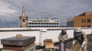 Beekeeping on the roof of a mosque