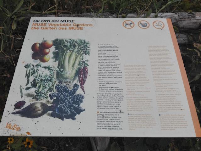 Vegetables in urban garden at museum_Trento