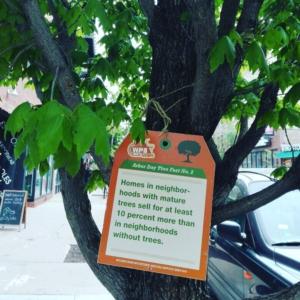 Árboles que cuentan la verdad