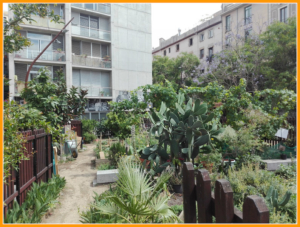 L'hortet del Forat  –  an urban garden in Barcelona