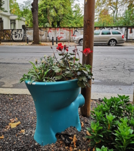 Plant a city tree to honour your loved ones