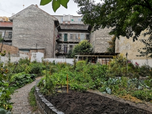 Urban gardens undergird a network of trust in Budapest