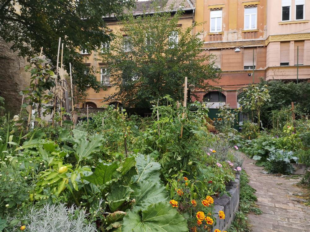 Urban-gardens-Budapest
