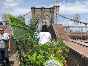 PopUP Forest: A call to biodiversity in cities from New York