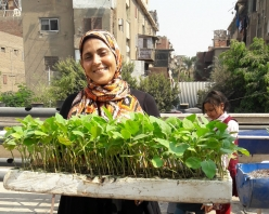 Food-security-Urban-Greens-Cairo