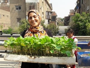 Food security: 'Urban Greens' cultivates resilience on the rooftops of Cairo