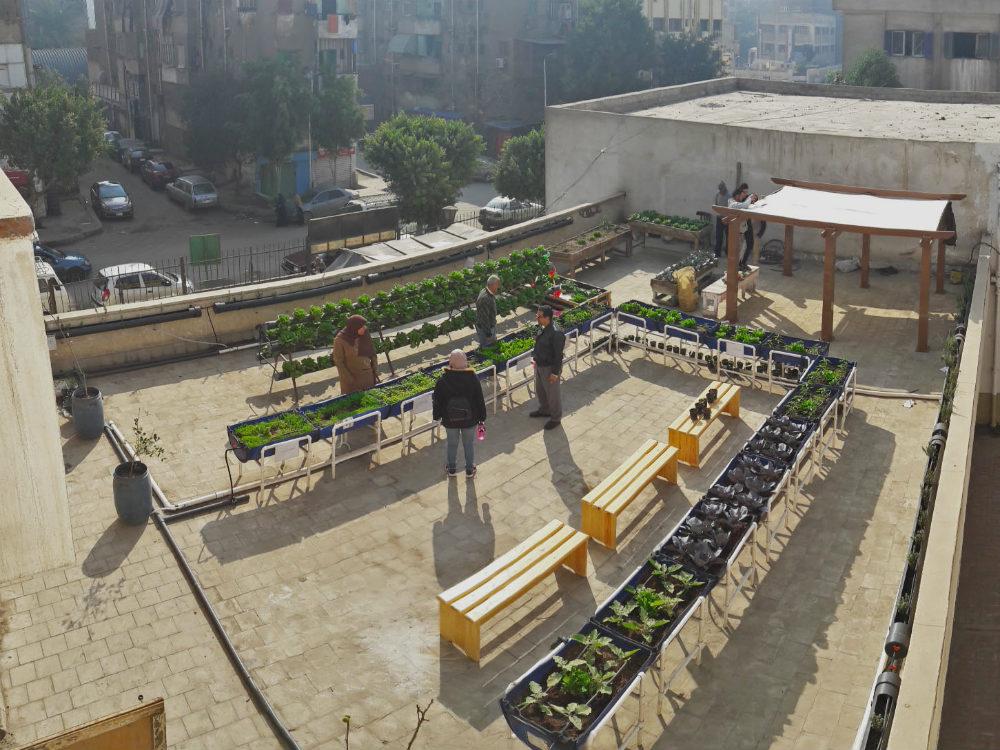 Greenroof-Cairo