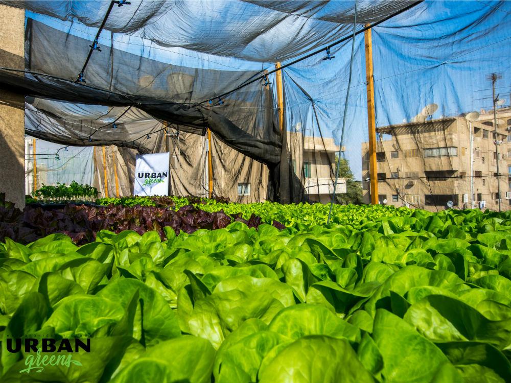 Urban-Greens-Rooftops-Cairo