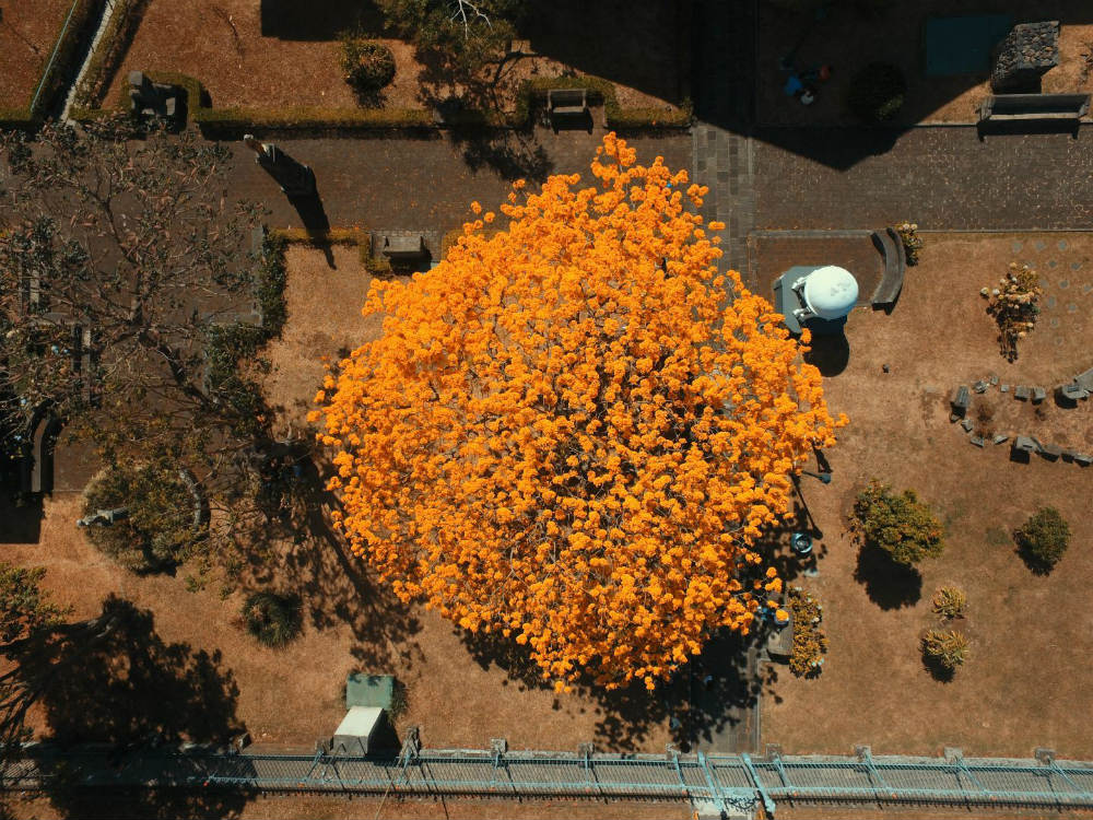 Trees-in-bloom-reconnect-cities-with-nature
