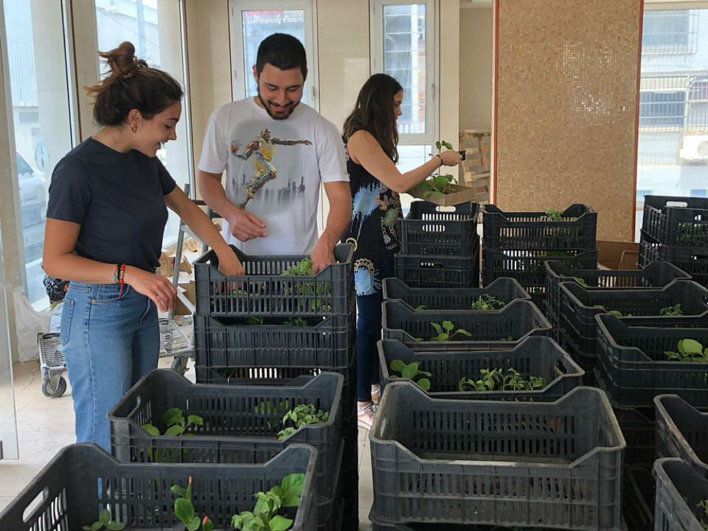 Urban-agriculture-Beirut