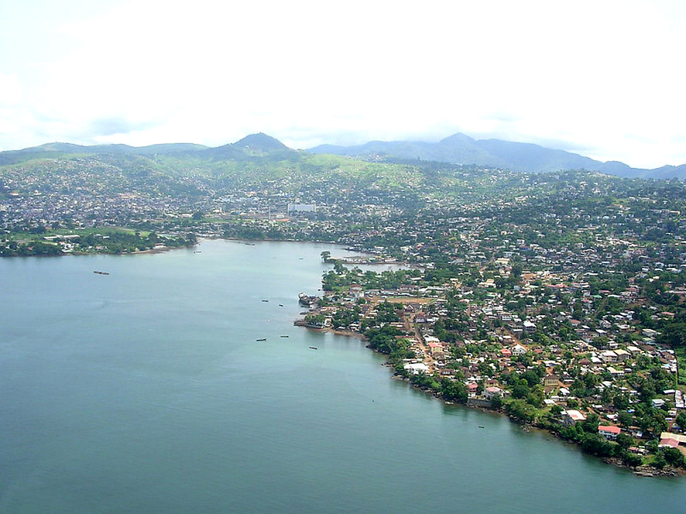 Reforesting-Freetown