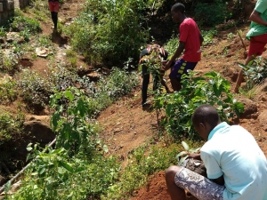 Tree-planting-water-catchment-Freetown