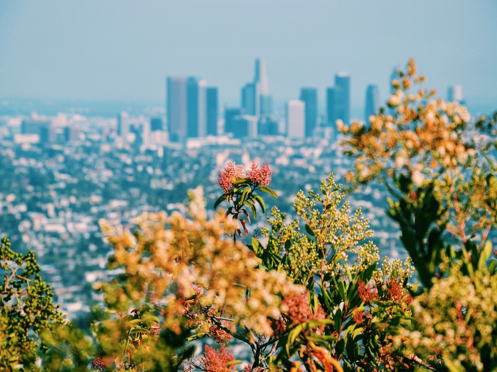 Pollination-friendly-cities
