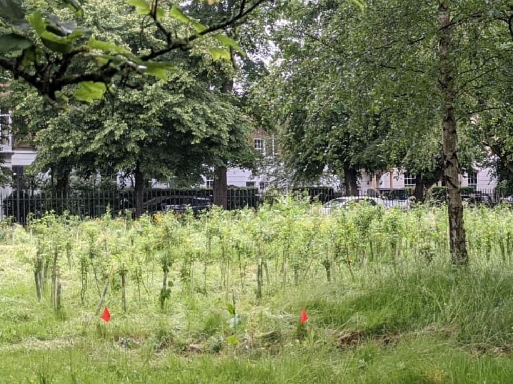 Sustainable-cities-London-for-climate